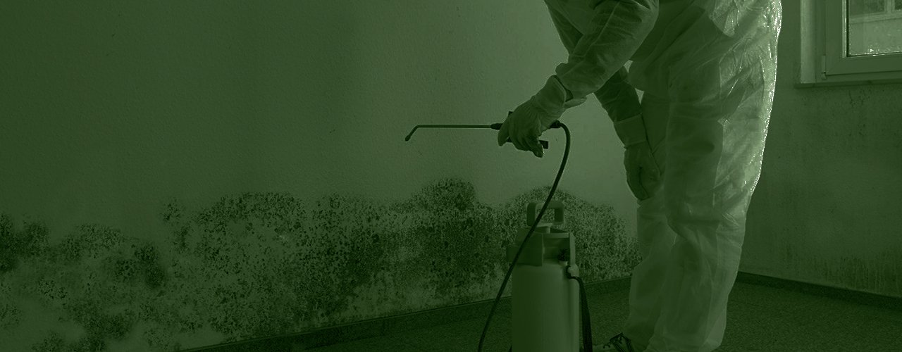 mold removal and cleanup